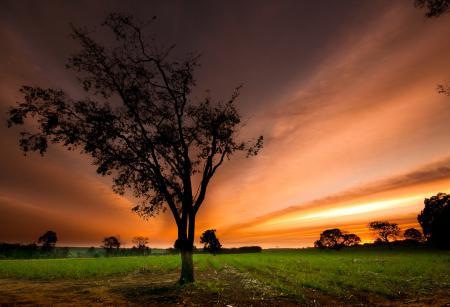 Обои дерево, поле, закат, небо