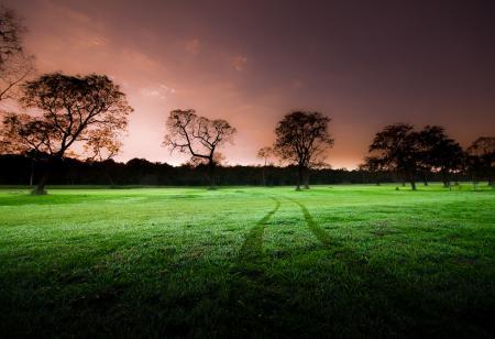 Обои природа, поле, зеленое, след