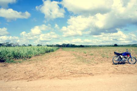 Заставки байк, поле, тростник, солце