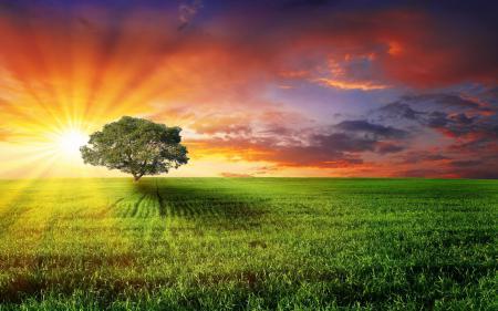 Обои природа, поле, дерево, солнце
