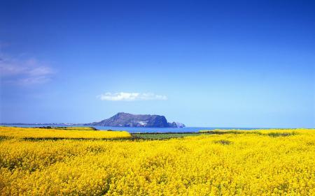Фотографии небо, поле, рапс, море