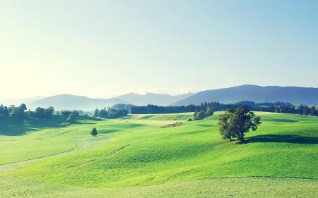 Фотографии пейзаж, поле, деревья, небо