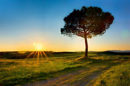 Картинки солнце, лучи, дерево, поле