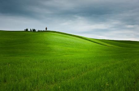 Фотографии поле, трава, небо