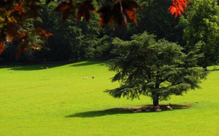 Заставки лужайка, овцы, деревья, тень