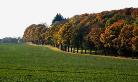 Заставки лесополоса, деревья, начало осени, поле