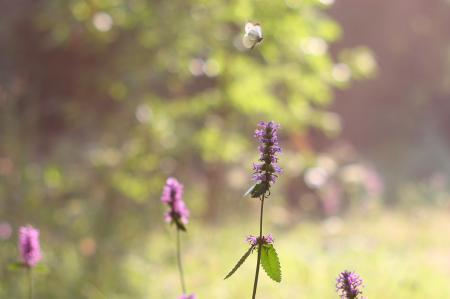 Фотографии лето, бабочка, цветок, солнце