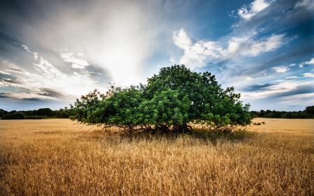 Фото поле, дерево, пейзаж