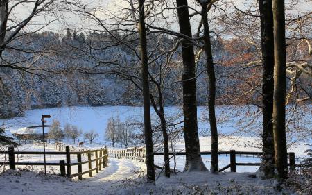 Заставки деревья, забор, кони, зима