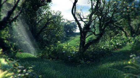 Фотографии заросли, лес, деревья, трава