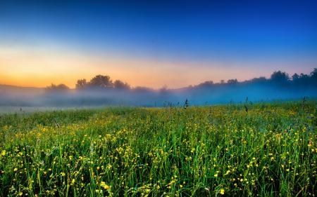 Обои поле, цветы, закат, пейзаж
