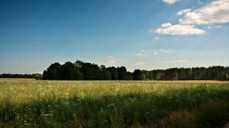 Фотографии Казань, Россия, деревья, лучи