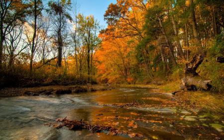 Картинки река, лес, осень