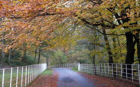 Обои забор, дорога, пейзаж, осень