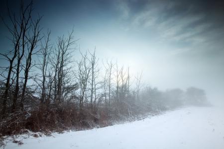 Обои зима, поле, туман, пейзаж