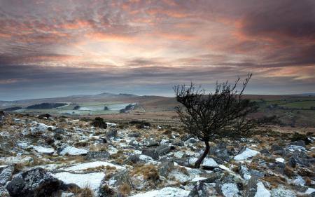 Заставки поле, снег, камни, дерево
