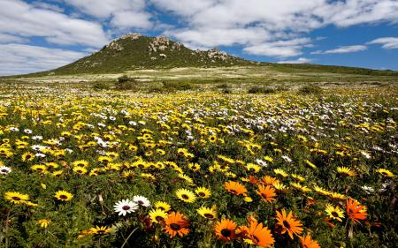 Картинки поле, цветы, лето, гора