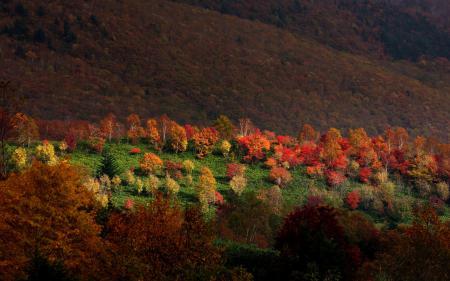 Картинки Sarukura, горы, лес, деревья