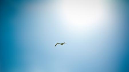 Обои full hd, пейзажи, птицы, птица