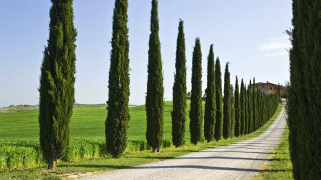 Заставки дорога, деревья, поле