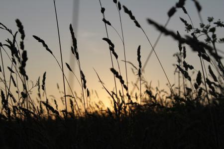 Фото пейзаж, природа, макро, растение