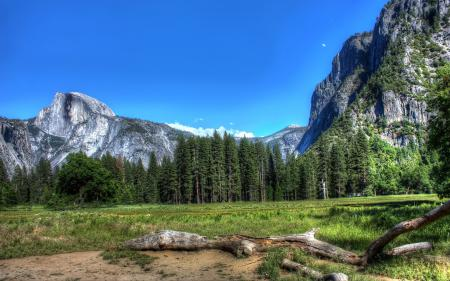 Фотографии пейзажи, природа, обои, дерево