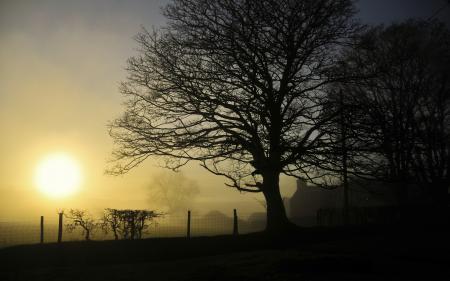 Фотографии пейзажи, дерево, заборы, природа