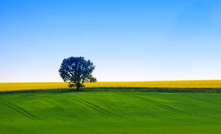 Картинки природа, дерево, поле, небо