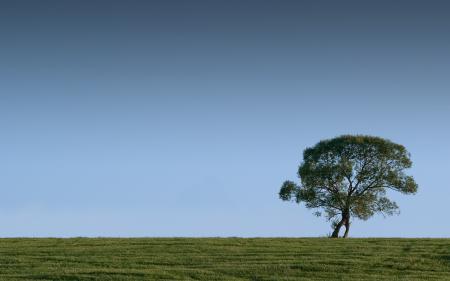 Заставки пейзажи, дерево, деревья, трава