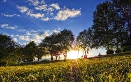 Фото пейзажи, парки, деревья, дерево