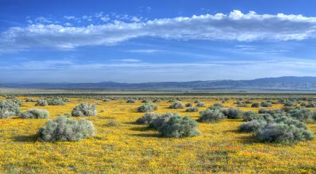 Обои widescreen wallpapers, пейзажи, поле, поля