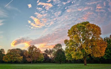 Обои пейзажи, природа, дерево, деревья