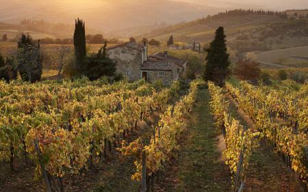 Фото виноградник, поля, дом, холмы