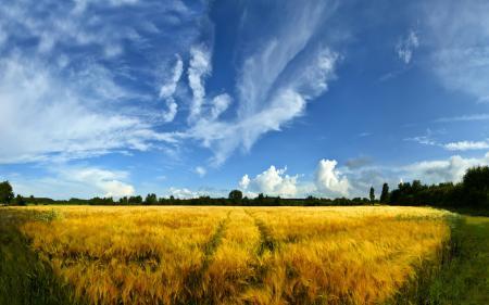 Фотографии пейзажи, природа, поле, поля