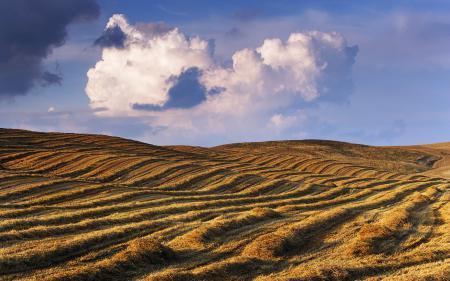 Обои поле, злаки, небо