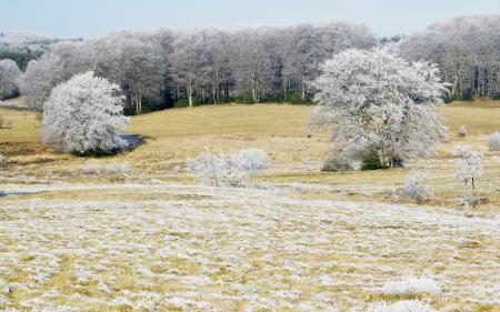 Фотографии Поле, деревья, иней, природа