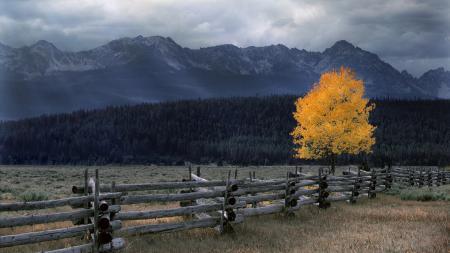 Заставки nature, пейзаж, природа, дерево