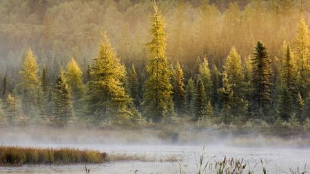 Картинки лес, деревья, природа, пейзаж