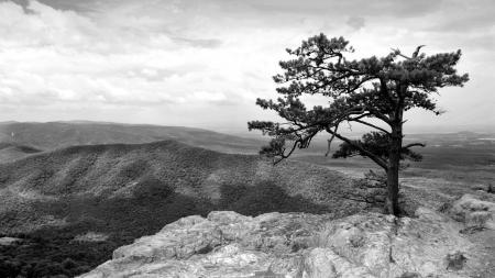 Фотографии черно-белое, дерево, горы, высота
