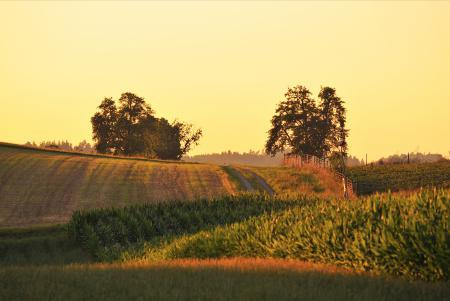 Заставки природа, поле, лето, день