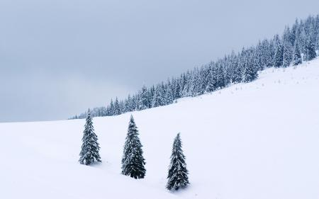 Заставки snow, winter wallpapers, снег, зима