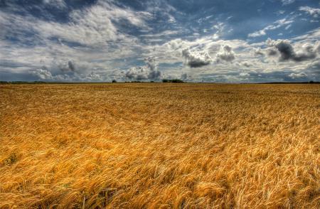 Заставки природа, небо, облака, поле