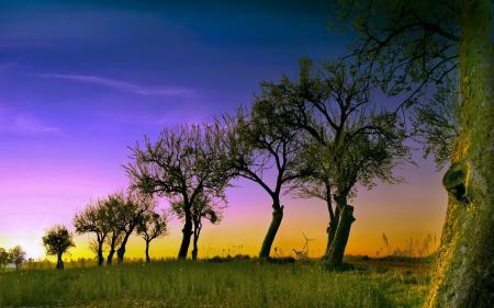 Фото деревья, небо, пейзаж