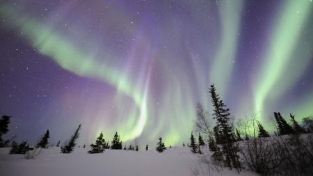 Заставки зима, ночь, северное сияние, деревья