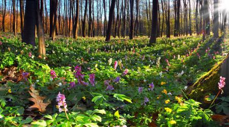 Заставки Sunshine wood, вескна, лес, яркон