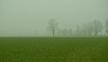 Фото поле, трава, зелень, туман