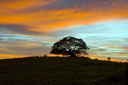 Картинки дерево, закат, лето, photos