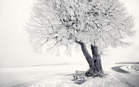 Заставки frozen tree, зима, дерево, снег