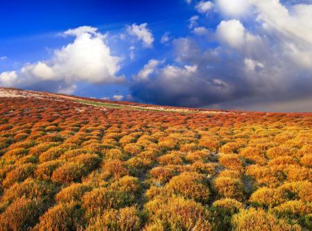 Фотографии Beautiful view, пейзаж, красочная, растительность
