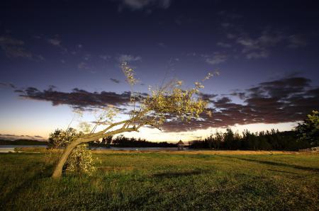 Картинки природа, вечер, дерево